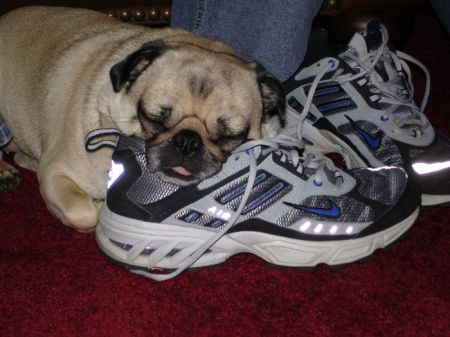 Napping on Daddy  s Shoe